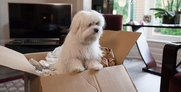 An Exclusive Guide to Moving with Pets