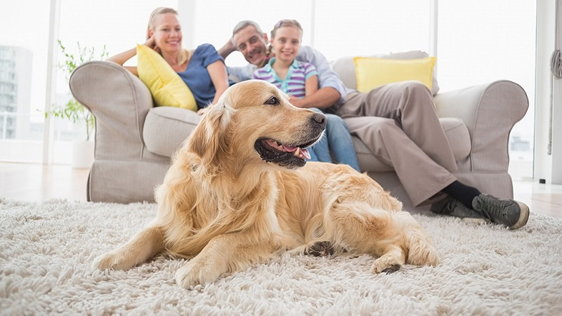 Effective Tips for Moving With Pets